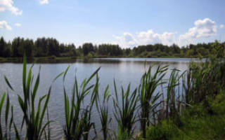 Рыбалка Ногинск