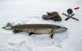 Гилёвское водохранилище — место для рыбака