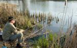 Ловля карася весной