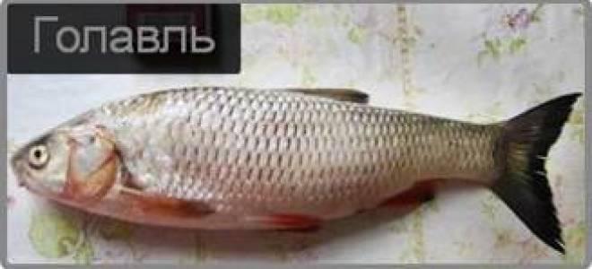 Голавль по-царски со сливками. — рыбные рецепты