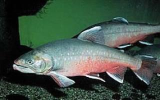Леприндокан озеро — место для рыбака