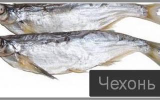 Засолка чехони — рыбные рецепты