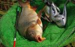 Оснастка для ловли сазана на течении