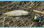 Правила выбора уловистой блесны для ловли форели