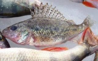 Вяленый ёрш — рыбные рецепты