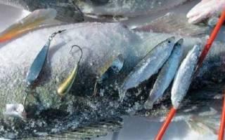 Ловля судака на тюльку