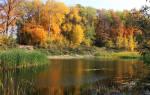 Осенняя ловля карпа и сазана: на что ловить карпа осенью, ловля карпа на манку
