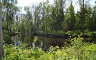 Черновское озеро — место для рыбака