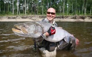 Ловля тайменя: Летняя и осенняя ловля речного гиганта