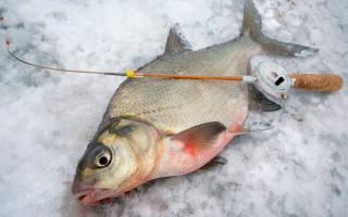 Ловля леща на поплавочную удочку зимой со льда