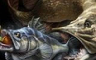 Туловчиха — место для рыбака