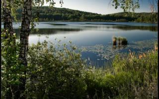 Светленькое озеро — место для рыбака