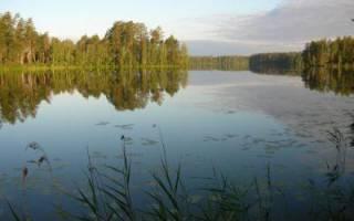 Широха озеро — место для рыбака