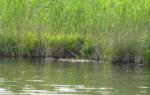 Садок озеро — место для рыбака