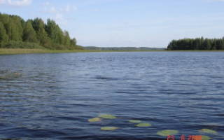 Озеро Янисъярви (Большое Янисъярви) — место для рыбака