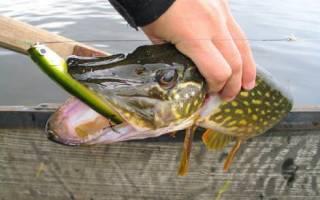 Советы по правильной ловле рыбы на воблер