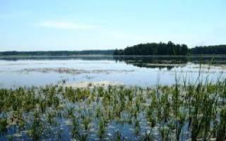Большой Боляш озеро — место для рыбака