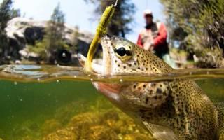 Устройство снасти перетяга и ловля рыбы на нее