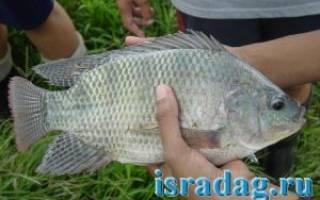 Мушта — место для рыбака