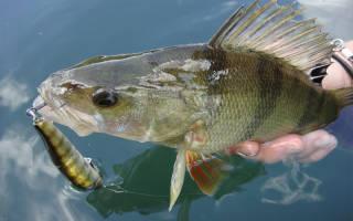 Рыбалка в марте: какую рыбу ловить в марте