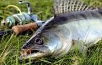 Как ловить судака на спиннинг: от простого к сложному