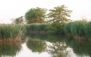 Пшеха — место для рыбака