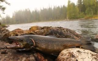 Семёновское озеро — место для рыбака