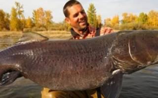 Рыбалка с Алексеем Чернушенко