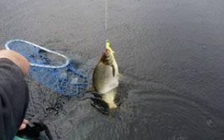 Как сделать снасть для ловли леща с лодки, устройство кормушки