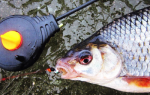 Озеро Кривецкая Старица — место для рыбака