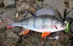Рыбалка в Подмосковье в сентябре: какую рыбу ловить в сентябре в Подмосковье