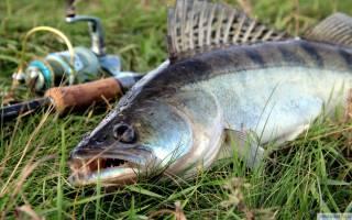 Плюсса — место для рыбака