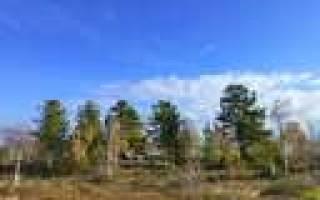 Озеро Тету-Мамонтотяй — место для рыбака