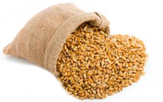 Ловля карпа на пшеницу