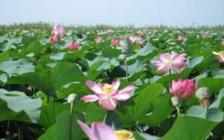 Левая Сагды-Бира — место для рыбака