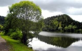 Симский пруд — место для рыбака