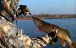 Польной Воронеж — место для рыбака