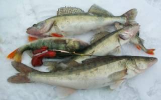 Снасти для ловли судака зимой: выбираем правильно