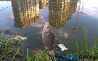 Сетунька — место для рыбака