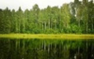 База отдыха «Доброе хозяйство» — платные водоемы