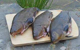 Линь в сметанном соусе — рыбные рецепты