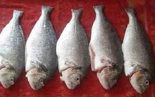 Усач в фольге на решетке — рыбные рецепты