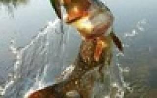 Рыбалка на Волге с Сергеем Фильдшиным