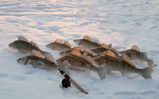 Ловля судака в марте на джиг