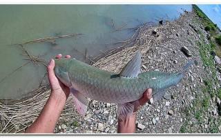 Амур — место для рыбака