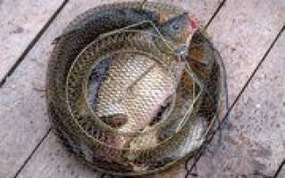Куваш — место для рыбака
