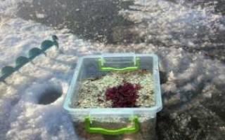 Ловля леща зимой со льда: особенности лова, прикорма и насадок