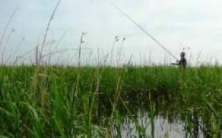Карагуш озеро — место для рыбака