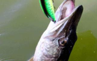 Ловля щуки в июле: Где ловить щуку, приманки для ловли щуки в июле