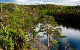Щучье озеро (Санкт-Петербург) — место для рыбака